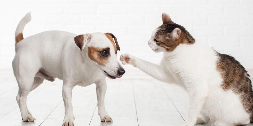 Why Do Cats and Dogs Fight?
